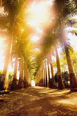Corridor Of Palm Trees Art Print by Darren Greenwood
