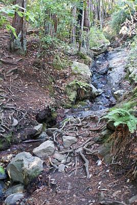 Photograph - Corte Madera Creek On Mt Tamalpais by Ben Upham III