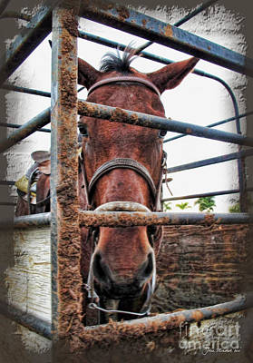 Photograph - Cosco Horse by Joan  Minchak