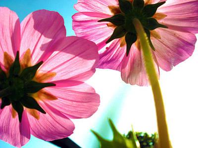 Photograph - Cosmia Flower Twins by Sumit Mehndiratta