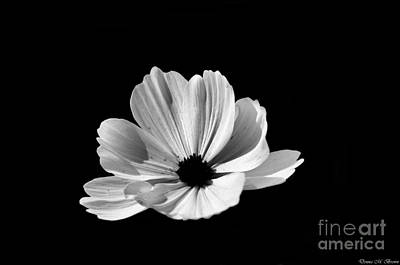Photograph - Cosmo Black And White by Donna Brown