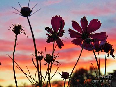 Photograph - Cosmo Sunset by Judy Via-Wolff