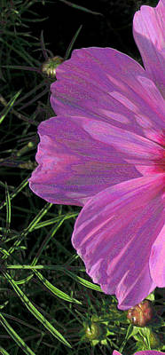 Photograph - Cosmos Portrait 1 by Lora Fisher