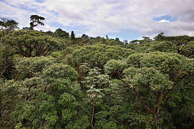 Photograph - Costa Rican Canopy by Bob Park