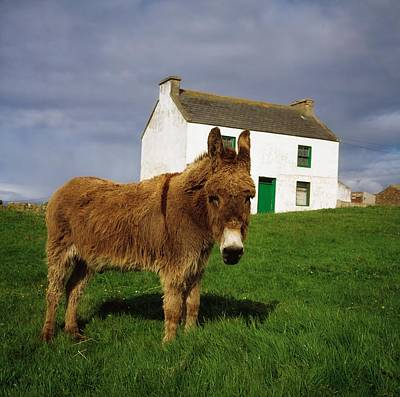 Remoteness Photograph - Cottage And Donkey, Tory Island by The Irish Image Collection