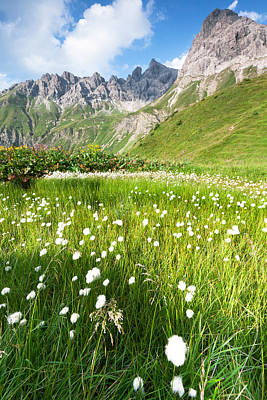 Y120907 Photograph - Cotton Grass In A Meadow, Allgäuer Alps by Ingmar Wesemann