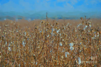 Photograph - Cottonfield by Donna Greene
