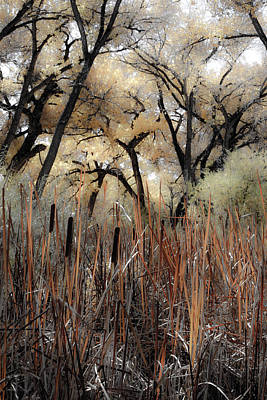 Photograph - Cottonwoods And Cat Tails by Denice Breaux