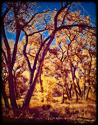 Photograph - Cottonwoods by Mark Forte