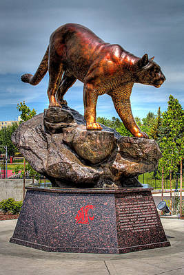 Photograph - Cougar Pride II by David Patterson