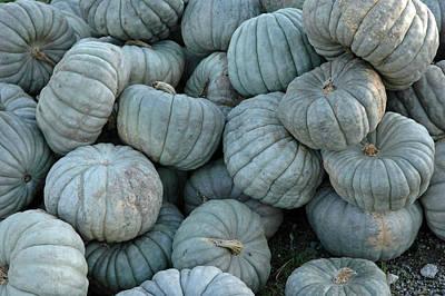 Autumn Photograph - Counting Squash by LeeAnn McLaneGoetz McLaneGoetzStudioLLCcom