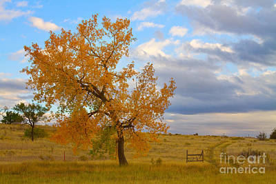 Country Autumn Landscape Art Print