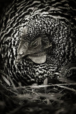 Photograph - Country Chicken 13 by Scott Hovind