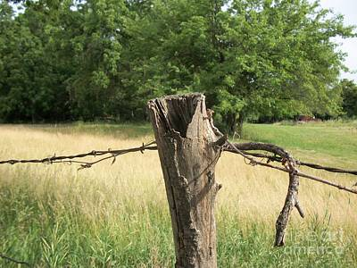 Wire Tree Photograph - Country Fence Post Ll by Marsha Heiken