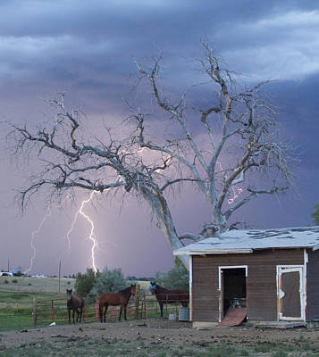 Striking Images Photograph - Country Horses Lightning Storm Ne Boulder County Co 66v by James BO  Insogna