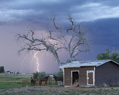 Country Horses Lightning Storm Ne Boulder County Co  Crop Art Print by James BO  Insogna