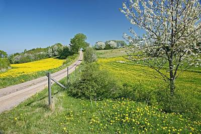 Cherry Blossoms Road Photograph - Country Lane by Bjorn Svensson