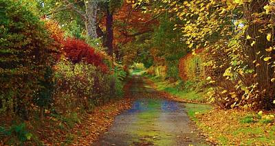 Photograph - Country Lane by Gavin Macrae