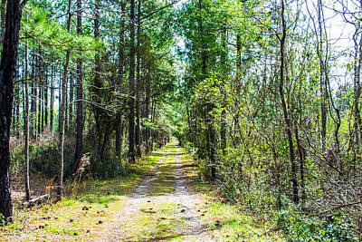 Photograph - Country Path by Shannon Harrington