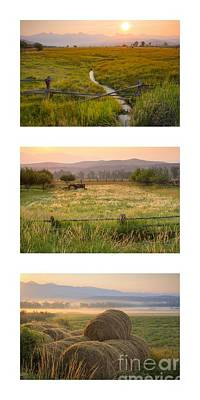 Photograph - Country Pink Trio by Idaho Scenic Images Linda Lantzy