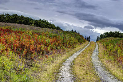Art Print featuring the photograph Country Road In Fall by Michele Cornelius