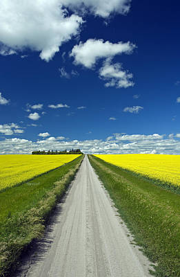 Country Road With Blooming Canola Art Print by Dave Reede