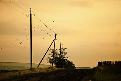 Flock Of Bird Photograph - Countryside Road With Birds On Sky by Made By  Vitaliebrega.com