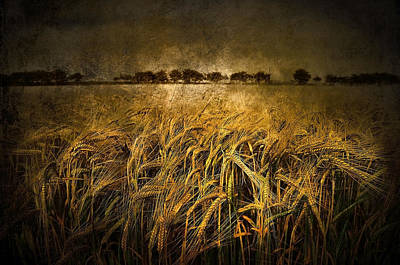 Designs In Nature Digital Art - Countryside by Svetlana Sewell