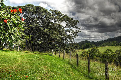 Countryside With Old Fig Tree Art Print by Kaye Menner