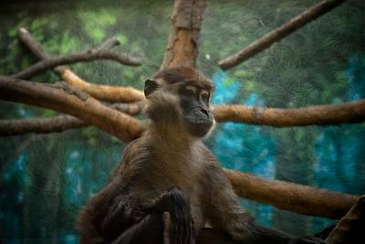Monkey Photograph - Courageous by Trish Tritz