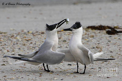 Photograph - Courtship by Barbara Bowen