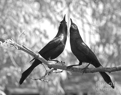 Photograph - Courtship by Jan Piller
