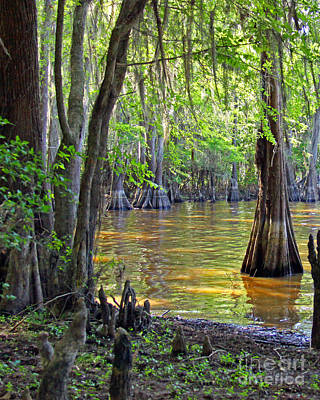 Cove At Caddo Lake Art Print by Gayle Johnson