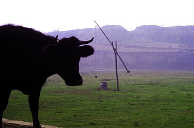 Photograph - Cow And Well by Emanuel Tanjala