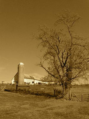 Photograph - Cow Barn by JD Grimes