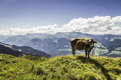 Graubunden Photograph - Cow Grazing On Grassy Hillside by Manuel Sulzer