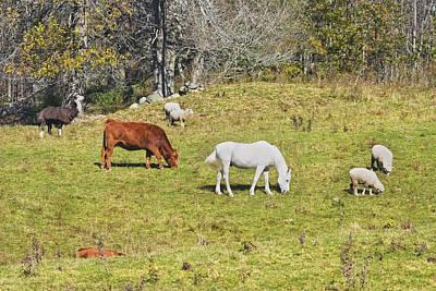 Cow Horse Sheep Grazing On Grass Farm Field Maine Art Print