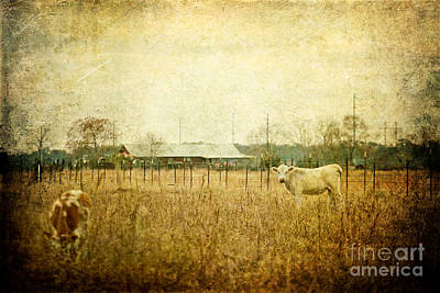 Cow Pasture Art Print by Joan McCool