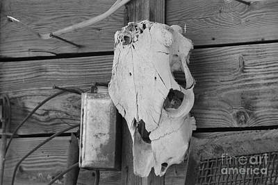 Photograph - Cow Skull On Barn by Pamela Walrath