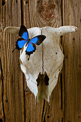 Photograph - Cow Skull With Blue Butterfly by Garry Gay