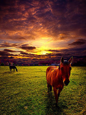 Cowboy's Delight Print by Phil Koch