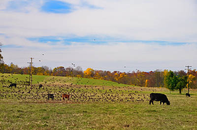 Gettysburg Photograph - Cows And Birds by Bill Cannon