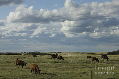 Photograph - Cows And Clouds by Donna L Munro