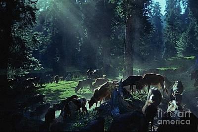 Cows Come Home Art Print by Vilas Malankar