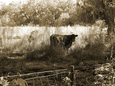 Cows In Pasture Art Print by Pamela Stanford
