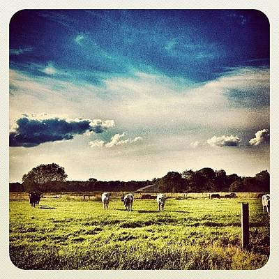 Dutch Photograph - #cows In The Field by Wilbert Claessens