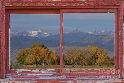 Cows Life Colorado Autumn Rocky Mountains Picture Window Art Print by James BO  Insogna