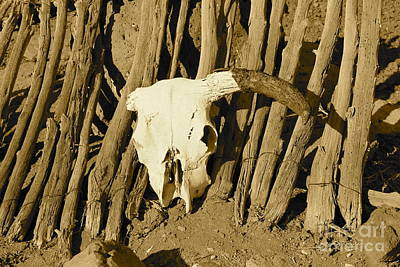 Photograph - Cowskull - Sepia by Pamela Walrath
