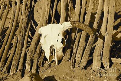 Photograph - Cowskull - Sepia by Pamela Walrath