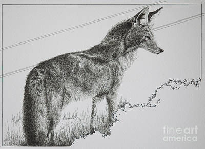 Oklahoma Drawing - Coyote Sunset by Tracy L Teeter